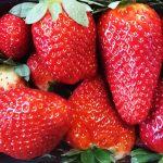 Căpșune Grecia